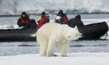 The Arctic wildlife is full of surprises