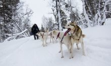 Dog sledding is a must-try attraction in winter in Lapland