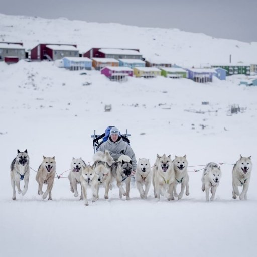 Exciting Dogsledding