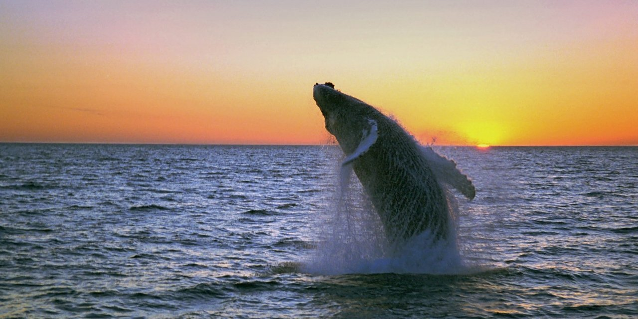 Amazing Whale Watching Safaris