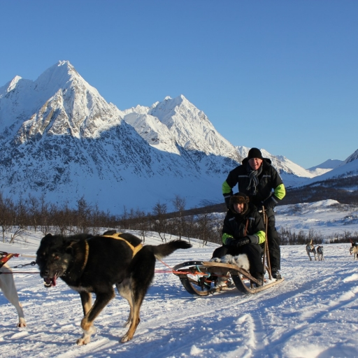 Northern Lights tour with dog sledge
